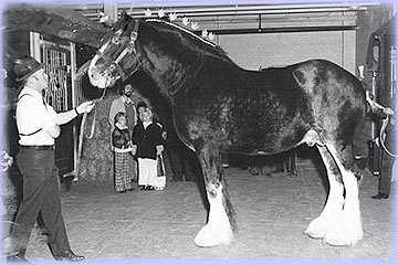 Aspiration - sire of Croydon Miss Judy